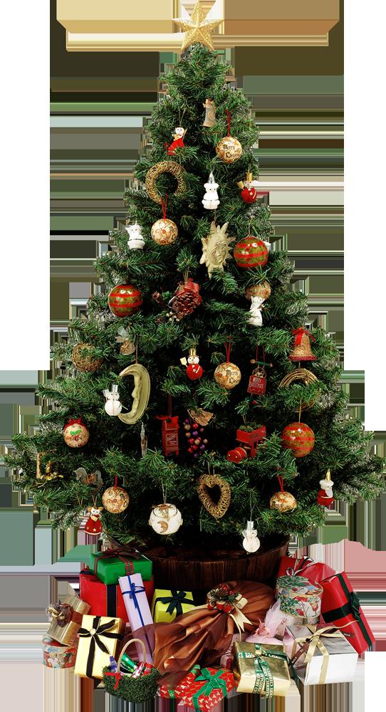 christmas-tree-psd97358
